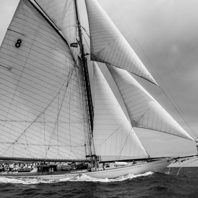 regata puig vela classica barcelona